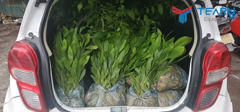 Mô hình trao tặng câygiống mang lại hiệu quả kép cho người dân lẫn môi trường